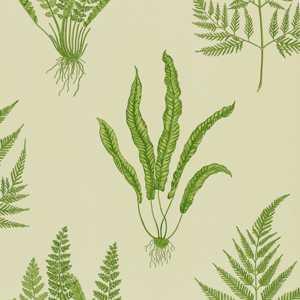 Woodland Ferns by Sanderson