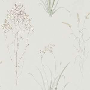 Farne Grasses by Sanderson