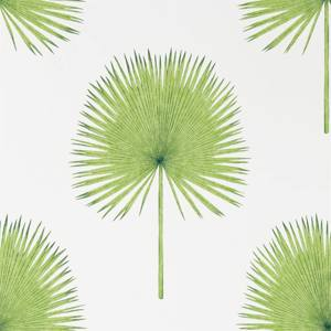 Fan Palm by Sanderson