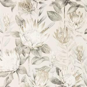 King Protea by Sanderson
