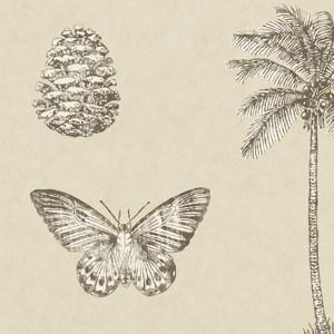 Cocos by Sanderson