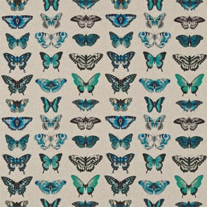 Papilio by Harlequin