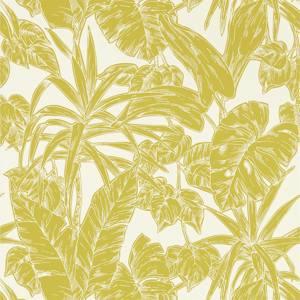Parlour Palm by Scion