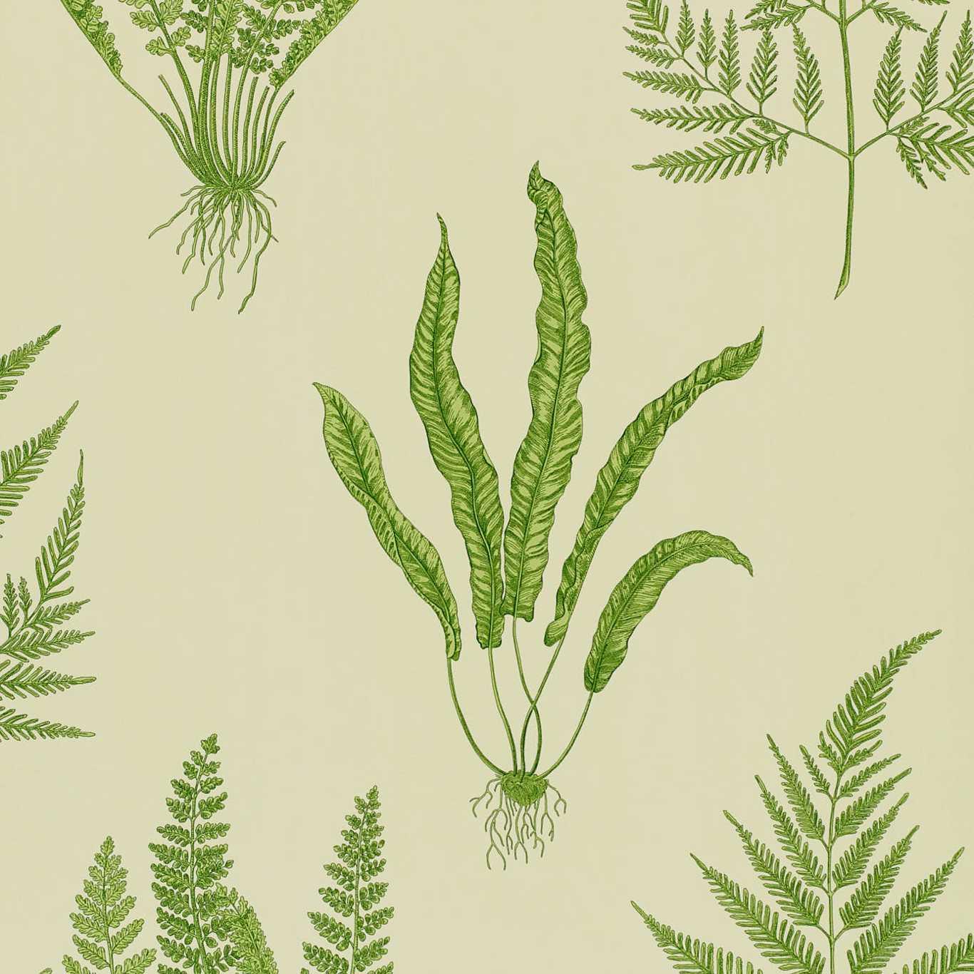 Woodland Ferns by SAN