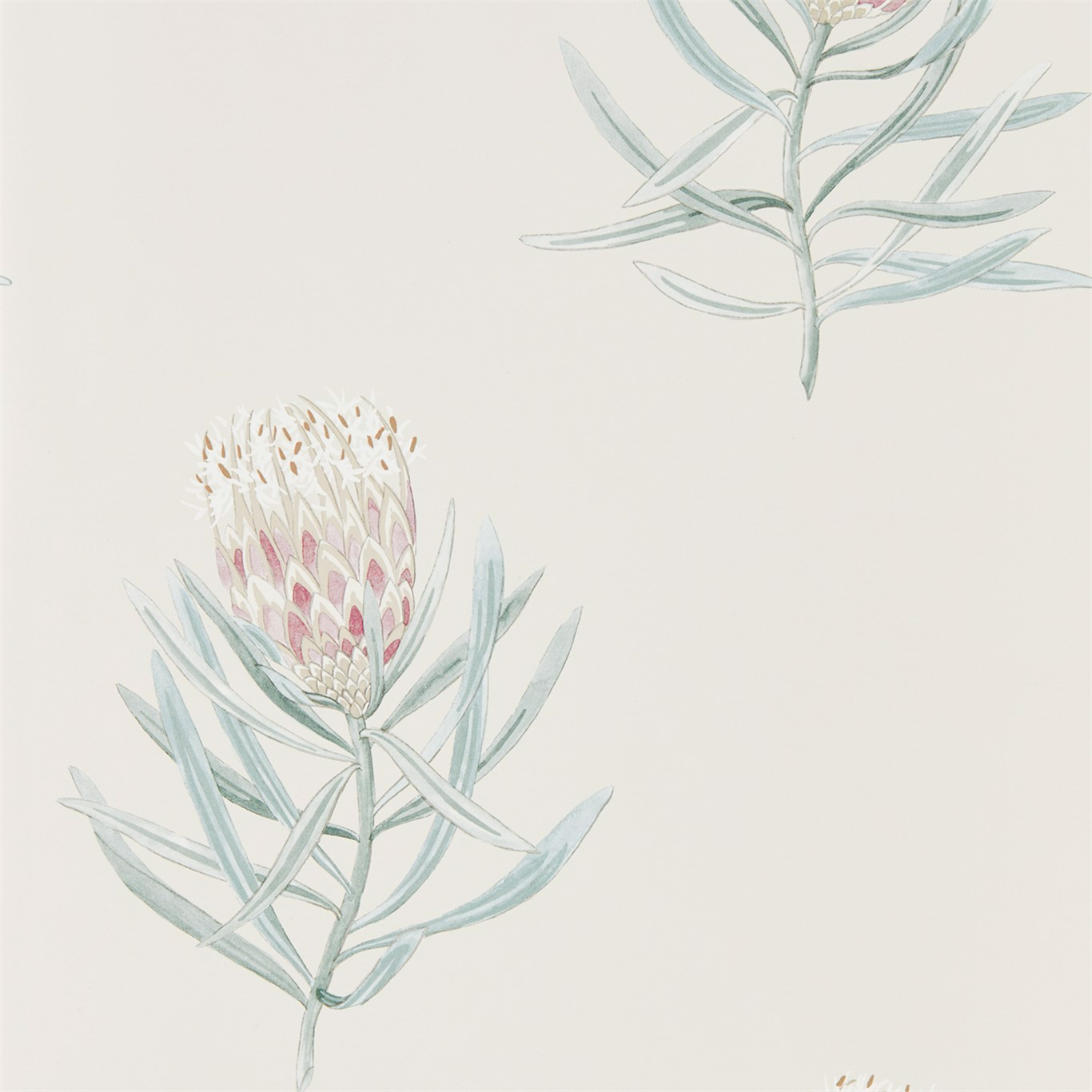 Protea Flower by SAN