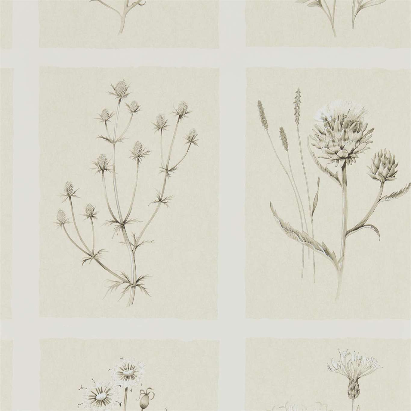 Little Thistles by SAN