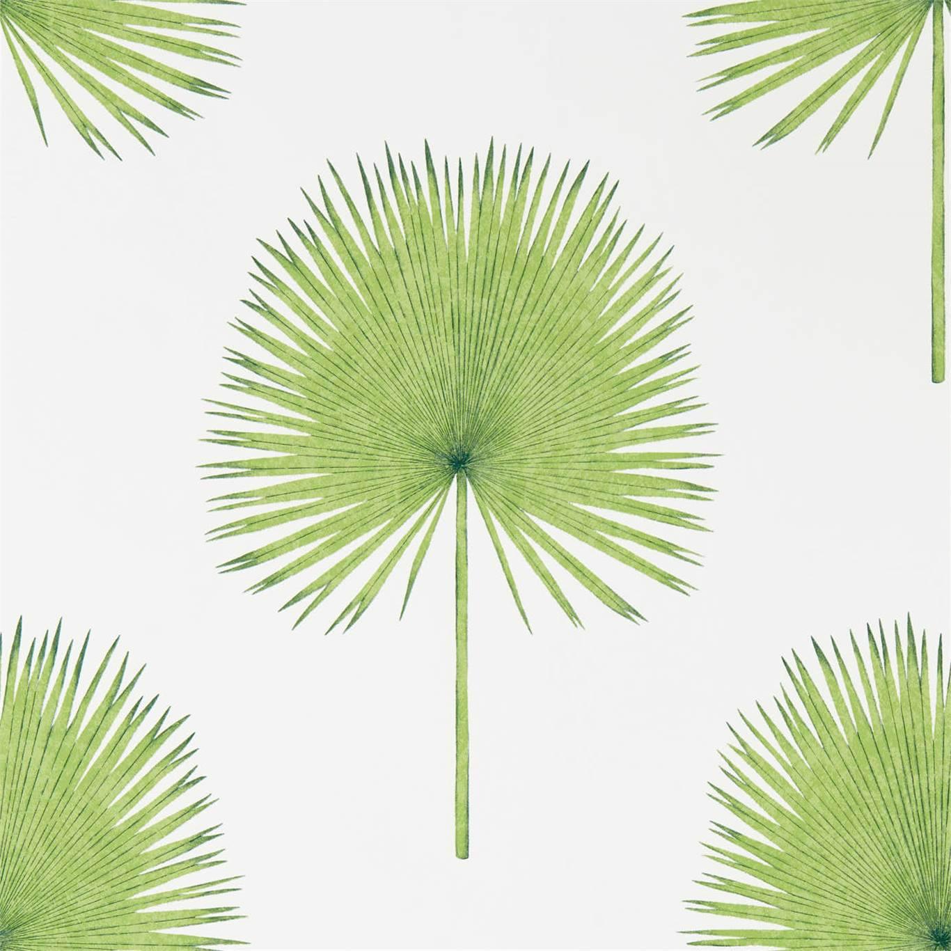 Fan Palm by SAN