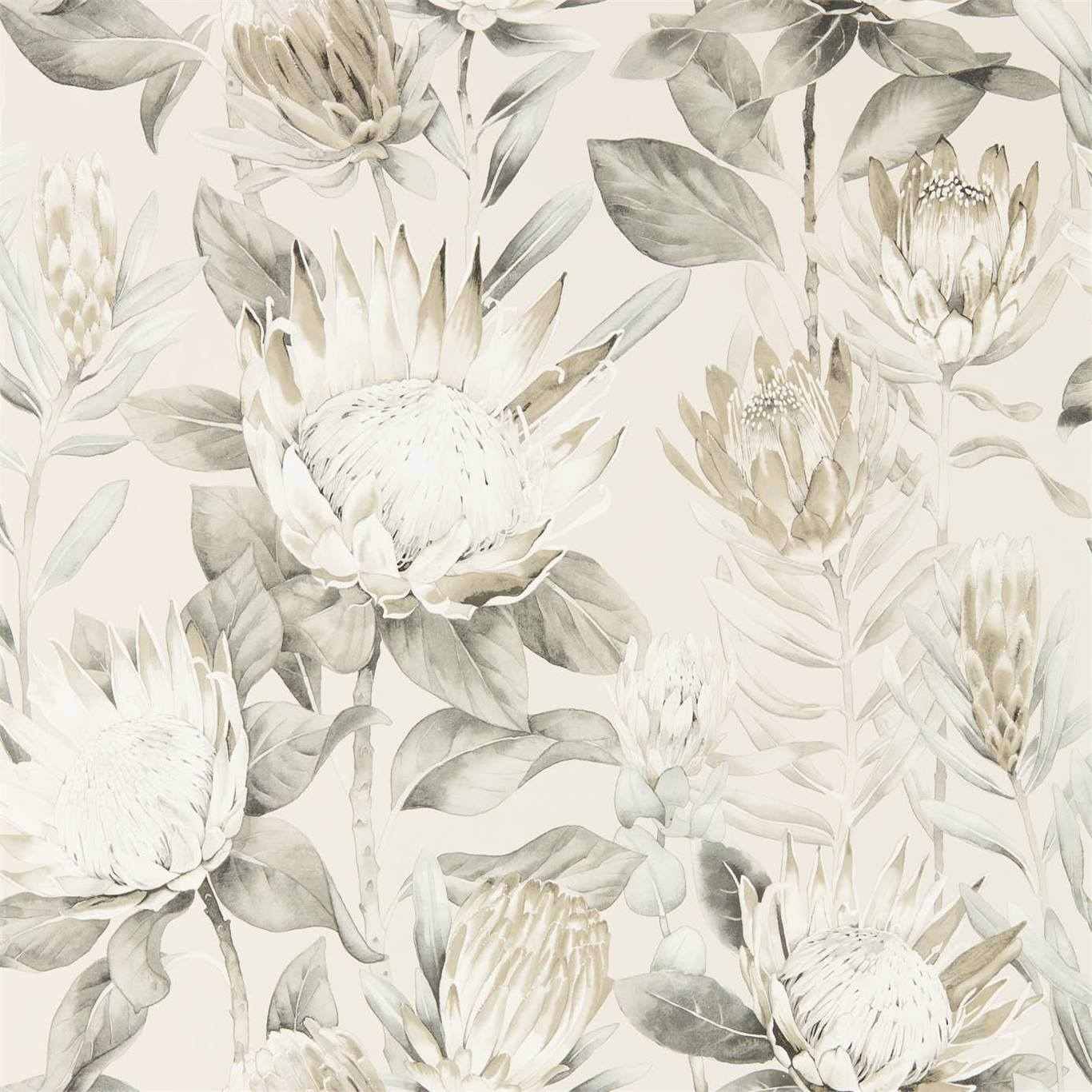King Protea by SAN