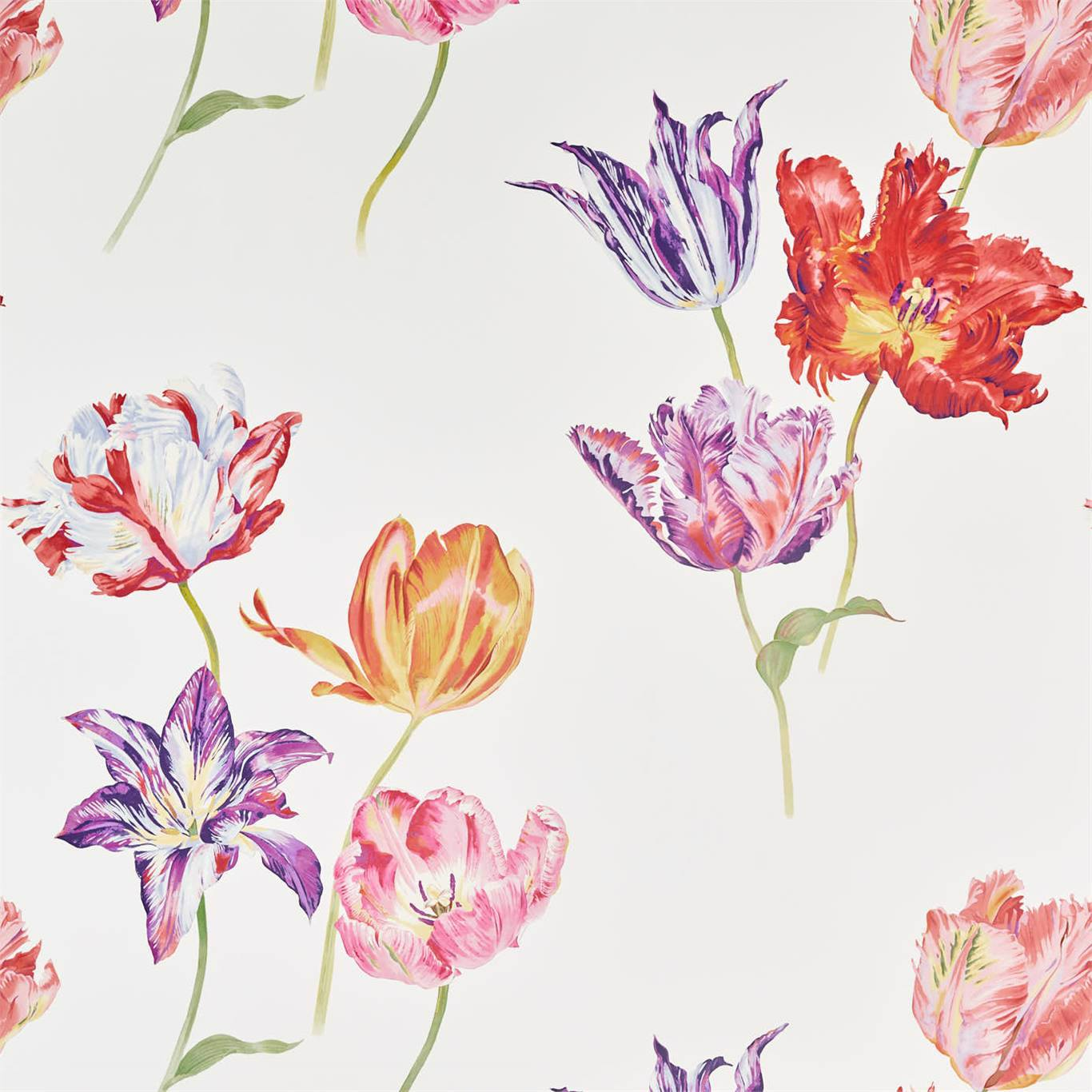 Tulipomania by SAN