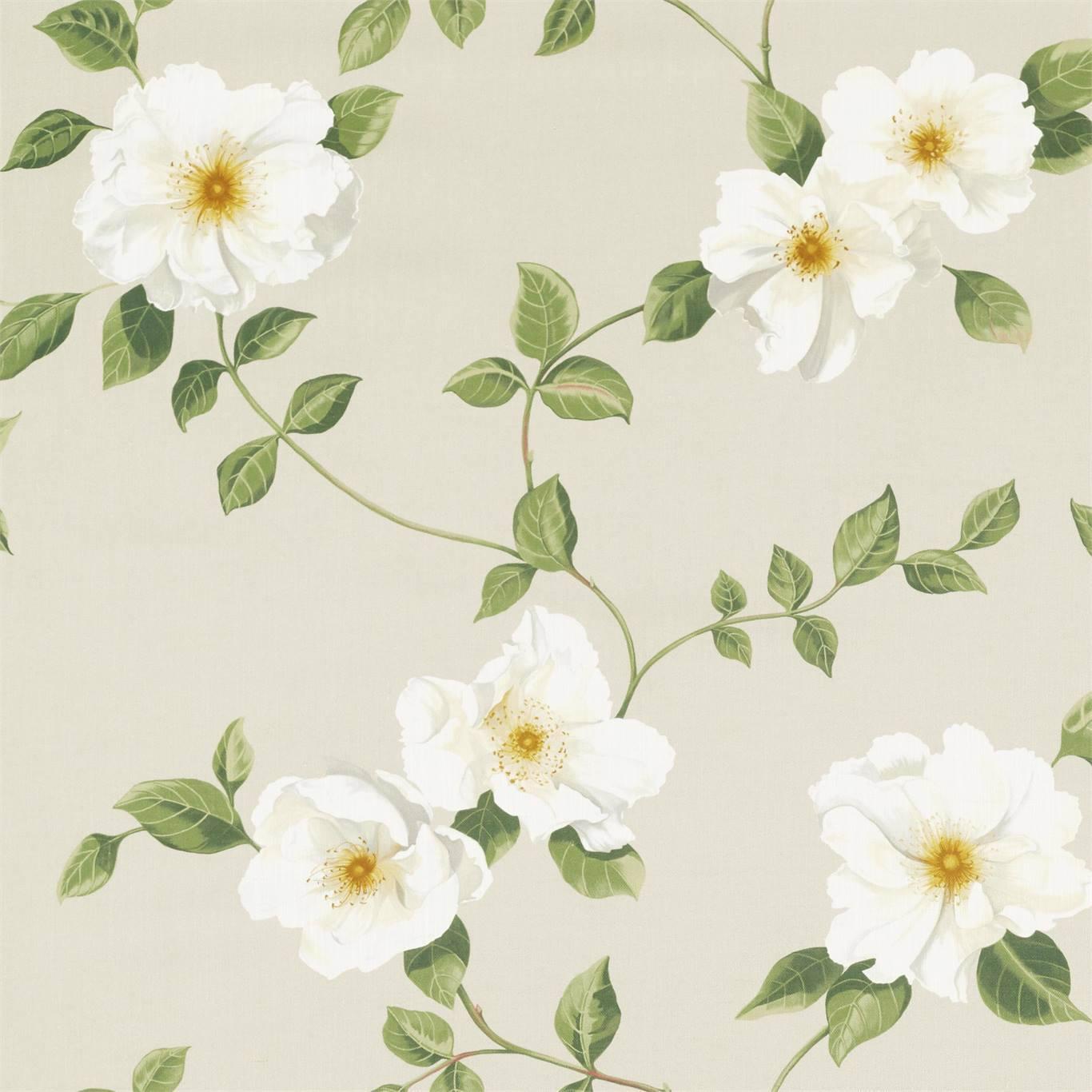 Poet''s Rose by SAN