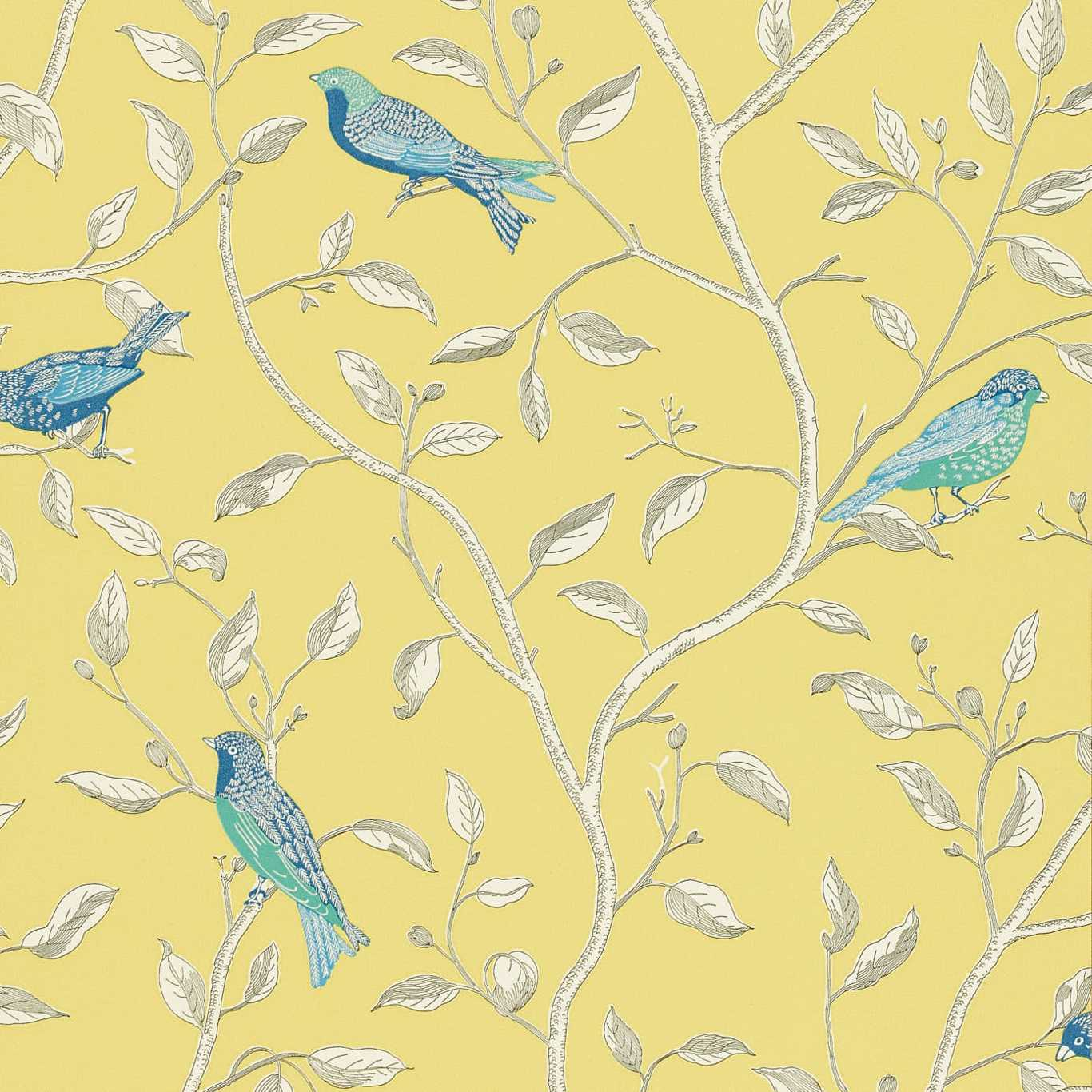 Finches by SAN