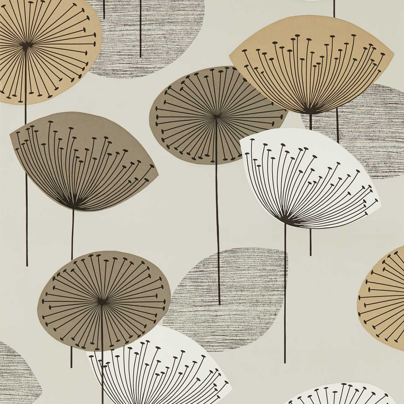 Dandelion Clocks by SAN