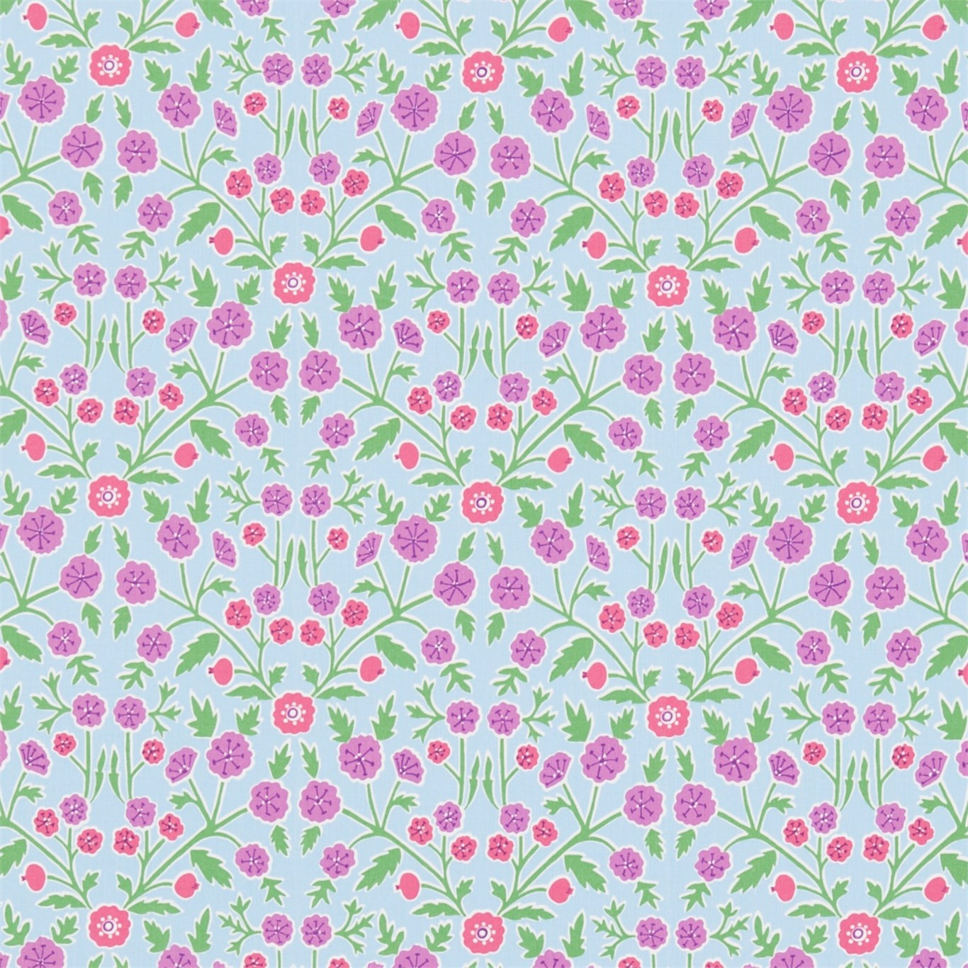 Candytuft by HOM