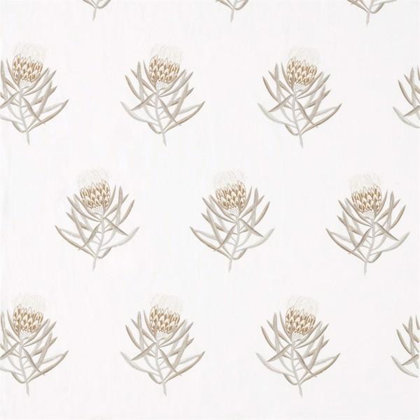 Protea Flower by Sanderson