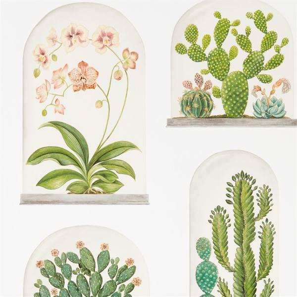 Terrariums by Sanderson